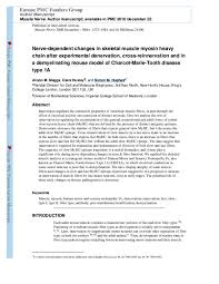 Pdf Nerve Dependent Changes In Skeletal Muscle Myosin Heavy