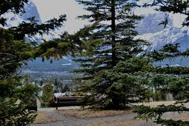 Beautiful, inspiring, idyllic Canmore, Alberta & While I was there, I paid a visit to The Sugar Pine Company, an  outstanding, destination quilt shop located on 7th Avenue. I realized I  hadn't been there ... Adamdwight.com