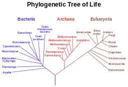 Protist Phylogenetic Tree Study Com