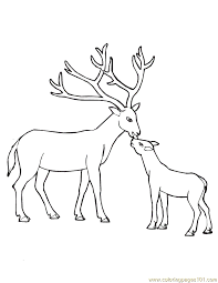 Small Picture How To Draw A Female Deer Coloring Coloring Pages