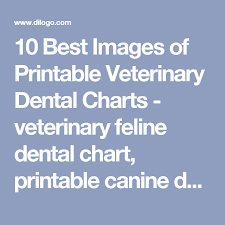 10 Best Images Of Printable Veterinary Dental Charts