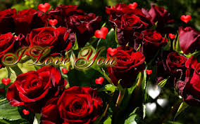 rose i love you gif
