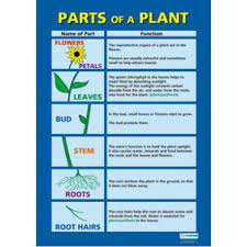 Chart Parts Of A Plant