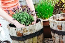 container gardening. Container Gardening T