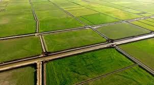 تاکنون 906 میلیون متر مکعب آب تحویل شبکه آبیاری و زهکشی گیلان شده است   خبرگزاری ایلنا
