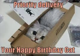 Memes Vault Happy Birthday Cat Memes via Relatably.com