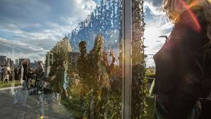 the roof garden commission dan graham with ther vogt was installed by future green studio and is coming to a close at the metropolitan museum of art in