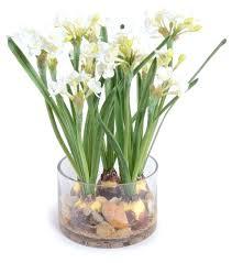 White Paper Flower Bulbs Paper White Flowers Rentonautorepair Co