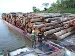 imagem de Novo Aripuanã Amazonas n-18