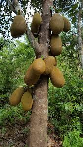 Small Trees Requiring 15 Feet SpacingTree Bearing Fruit