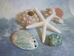 Bulk Starfish Decorations Blue Starfish Decorations Room Decoration Ideas Bright