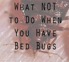 Bedbugs Images Bed Bug Free Holidays Lets Beat The Bed Bug