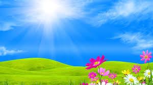 Field Spring Meadow Flowers Grass Sunshine Sky Field Green Dual