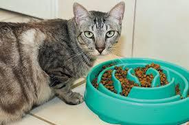 The Wet Cat Food Vs Dry Cat Food Debate Catster