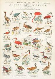 Vintage School Chart French 1900 Birds By Bonnieandbell On