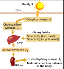 D D Item Template All About Vitamin D Measure Up