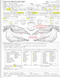 16 Dental Chart Template Best Of Primary Teeth Beautiful