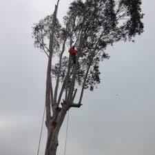 photo of mr robu0027s tree service el cajon ca united states robs tree service 280