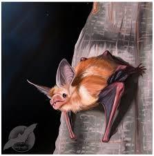 pallid bat sd painting by shorty antics 27