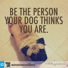 Cute Dog Quotes For Instagram Enchanting Cute Dog Quotes For Instagram Quotesta