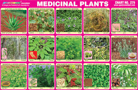 Plant Chart Spectrum Educational Charts Chart 279 Medicinal Plants