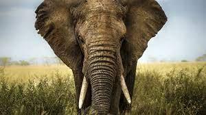 Elephant Desktop wallpapers - HD ...