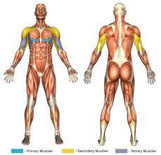 Decline Barbell Bench Press Exercise  Punjabi BodybuildersDecline Barbell Bench