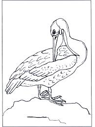 Pelikaan Kleurplaten Vogels