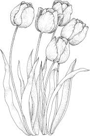 Four Tulips Coloring Page From Tulip