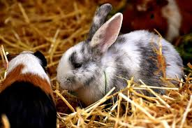 best bedding for rabbits