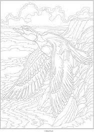 d66ff95f9e0535bef967dba8d01d41f3 255 best images about birds coloring page on pinterest coloring on creative coloring birds