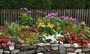 plant perennials in a cut flower garden