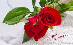 Roses Flowers Wallpapers 92 Good Morning Wishes With Rose
