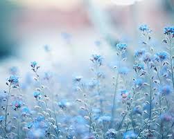 blue flowers background tumblr. Plain Background Blue Flowers Tumblr Intended Background L