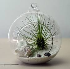 Simple Ideas About Hanging Air Plants On Pinterest Air Plants Along Then Air  Plants On Pinterest