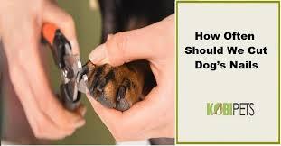 how often should we cut dog s nails
