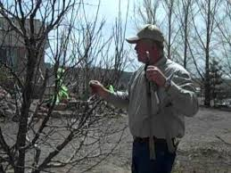 How To Prune A Plum Tree  YouTubePruning Fruit Trees Video