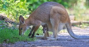 nike slammed over kangaroo leather soccer cleats