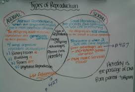 Venn Diagram Of Asexual And Sexual Reproduction Unit 8 Genes And Heredity Mrs Dixons Science Classroom