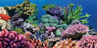 Aquarium Backgrounds Sporn Static Cling Coral Aquarium Background Medium Chewy Com