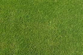 Grass Texture 50 WujinSHikecom