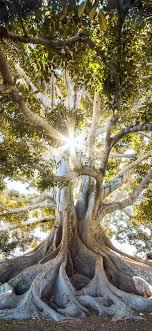 Iphone Wallpaper Trees