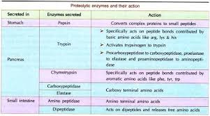 Protein Digestion Protein Digestion And Absorption Process Protein Metabolism