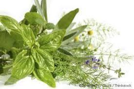 essay on medicinal plants  odolmyfreeipme medicinal plant healthcare jpgmedicinal plants for modern health care