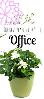 perfect office plants. Best Plants For Office Perfect Plant Ideas About On Photo I