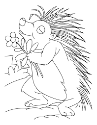 Small Picture Flower loving porcupine coloring pages Download Free Flower