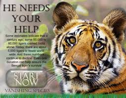 neha is best save wild life save our tigers