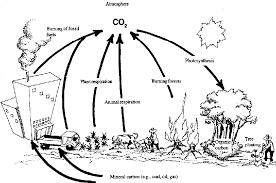 Carbon cycle coloring worksheet carbon dioxide and oxygen cycle ...