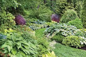care for hostas a plete hosta plant