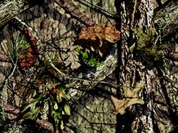 Mossy Oak Patterns New Mossy Oak BreakUp Country America's No 48 Pattern